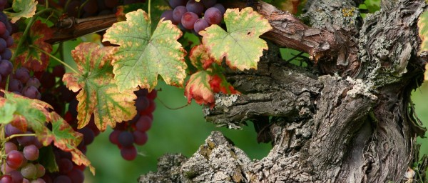 From Alsace with Love - Online Chat and Taste