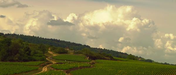 Bon-Vivants Wine Club: Film Night and Tour de Bourgogne!