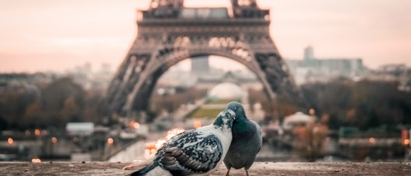 Trivia Night · The Paris of Amélie